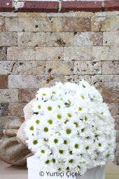 You will feel what you want to tell your loved ones with flowers in a bouquet of bouquet prepared with 25 branches of imported white chamomile.