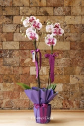 Ponseta (Ataturk Flower) will brighten the habitat of your loved ones with the beauty of nature with its lively color.