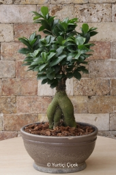 Stunted trees looking home, office as well as in different weather environments sent bonsai plant will add a nice gift for your loved ones will be.