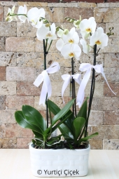 3 Department Surprise your loved ones with a big white orchids do it, unforgettable moments of Orchids By submitting you create.