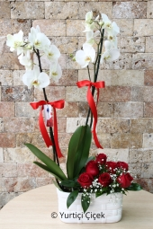 With the arrangement made with white orchids and roses in the ceramics, you can make a love-filled surprise for your loved ones. Approximate Product Size: 60 cm