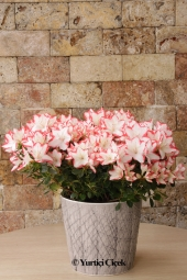 Special boxes of colorful flowers prepared by Bonsai Design Arrangement can tell your most private feelings.