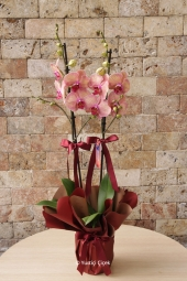 Red Roses: 12 Pieces    It is not difficult to share your heart with him. Heart of mica prepared with red roses and cipsolar surprise your love with this special arrangement do.