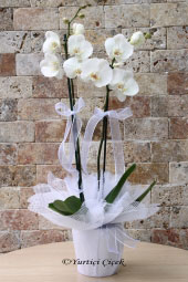 Send flowers to your loved ones will make them the most beautiful surprises. It is worthy of the most beautiful white orchid flowers.