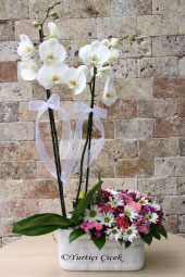 Orchid is the flower of love. Arrangement of orchids and wild flowers to your loved ones by sending them to feel how precious and special they are.